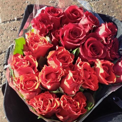 Ruusut Järvenpään asemalla